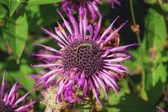 Il fiore sbiadito su un fondo delle foglie verdi Fotografie Stock
