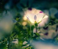 Il fiore si è acceso e si illuminato al centro di erba alla notte Macro colpo fotografia stock libera da diritti