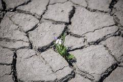 Il fiore si sviluppa in una crepa Fotografia Stock
