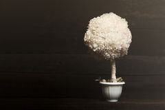 Il fiore su un fondo scuro Fotografia Stock Libera da Diritti