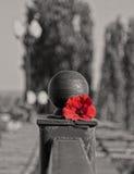 Il fiore sul Mamaev Kurgan Immagine Stock Libera da Diritti