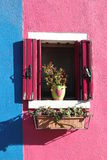 Il fiore sulla finestra Fotografia Stock Libera da Diritti