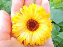 Il fiore sulla palma Fotografia Stock
