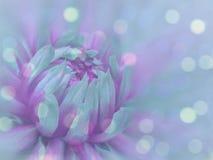 il fiore Turchese-porpora sul blu trasparente ha offuscato il fondo Primo piano Composizione floreale Priorità bassa floreale Fotografie Stock Libere da Diritti