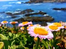 Il fiore unico Fotografia Stock