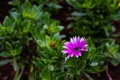Il fiore variopinto fotografia stock libera da diritti