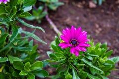 Il fiore variopinto fotografie stock libere da diritti
