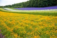 Il fiore variopinto in giardino Immagine Stock Libera da Diritti