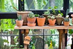 Il fiore verde sul vaso del vaso in giardino rende il tatto fresco e si rilassa Immagini Stock