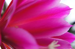 Il fiore viola fotografie stock