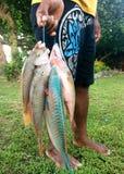 Il fisheman del Fijian porta il suo fermo di pesce di primo mattino Fotografie Stock Libere da Diritti