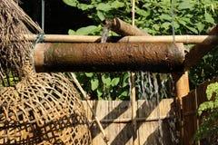 Il fiume attraversa il bambù per ritenere calmo e rilassato Fotografia Stock Libera da Diritti