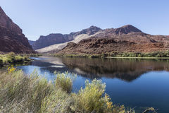 Il fiume Colorado al traghetto Arizona di Lees Immagini Stock