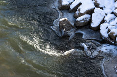 Il fiume combatte il ghiaccio Fotografie Stock Libere da Diritti