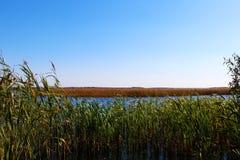 Il fiume con la canna ha riflesso nell'acqua in Frisia, Paesi Bassi immagine stock