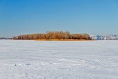 Il fiume congelato con una canna asciutta sull'isola Immagine Stock Libera da Diritti