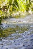 Il fiume corrente fotografie stock libere da diritti