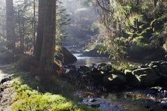 Il fiume della foresta in autunno soleggiato Immagine Stock