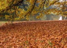Il fiume della foresta con gli alberi ingialliti ed il giallo lascia il tappeto sulla priorità alta Fotografia Stock