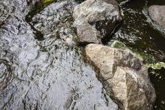 Il fiume della montagna Acqua corrente fra le pietre Fotografia Stock Libera da Diritti