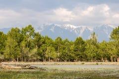 Il fiume della montagna che scorre giù dai ghiacciai Fotografie Stock Libere da Diritti