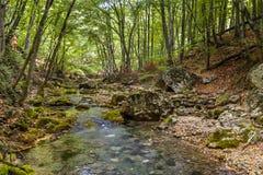 Il fiume della montagna in Crimea Fotografia Stock Libera da Diritti