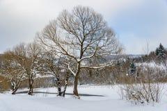 Il fiume della montagna Paesaggio di inverno Fotografie Stock