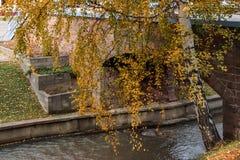 Il fiume di Belakurikh nella caduta Fotografie Stock Libere da Diritti