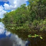 Il fiume di erba nel parco nazionale dei terreni paludosi Immagini Stock
