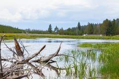 Il fiume di Firehole attraversa Yellowstone Fotografia Stock Libera da Diritti