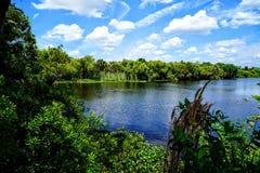 Il fiume di Myakka Immagine Stock