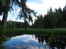 Il fiume di Oredezh Fotografia Stock
