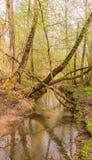 Il fiume di Yazvenka che attraversa il territorio della proprietà di Tsaritsyno mosca Federazione Russa immagini stock
