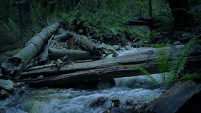 Il fiume e collega Forest At Dusk stock footage