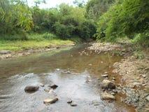 Il fiume e gli alberi di bambù sulla montagna fotografie stock