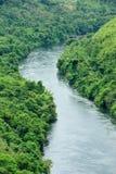 Il fiume in foresta Fotografie Stock Libere da Diritti