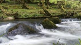 Il fiume Fowey, le cadute di Golitha, Bodmin attracca, Cornovaglia, Regno Unito Fotografia Stock Libera da Diritti
