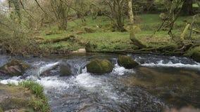 Il fiume Fowey, le cadute di Golitha, Bodmin attracca, Cornovaglia, Regno Unito Immagini Stock