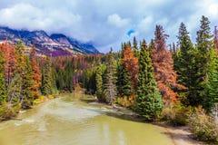 Il fiume fra le montagne e le foreste fotografia stock libera da diritti