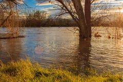Il fiume ha traboccato Immagini Stock Libere da Diritti