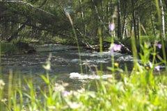 Il fiume Karakol della montagna Il rotolo Alberi di betulla fotografie stock