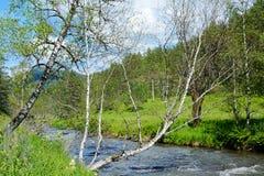 Il fiume Kuyum nelle montagne di Altai Fotografia Stock
