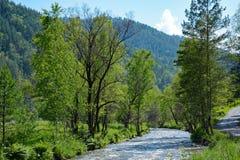 Il fiume Kuyum nelle montagne di Altai Immagine Stock Libera da Diritti