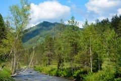 Il fiume Kuyum nelle montagne di Altai Fotografia Stock Libera da Diritti