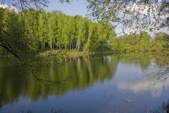 Il fiume in legno di estate Fotografia Stock