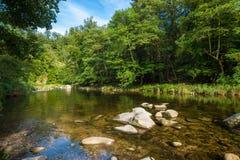 Il fiume Murg nella valle di Murg vicino a Forbach Immagini Stock Libere da Diritti