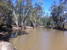 Il fiume Murray Fotografia Stock Libera da Diritti
