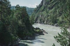 Il fiume nel altai montagnoso fra le montagne Fotografie Stock Libere da Diritti