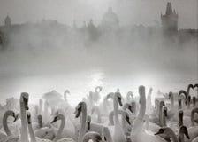 Il fiume nell'inverno Fotografia Stock