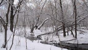 Il fiume nella foresta dell'inverno, flusso della molla dalla neve di fusione, si sommerge nella foresta in primavera archivi video